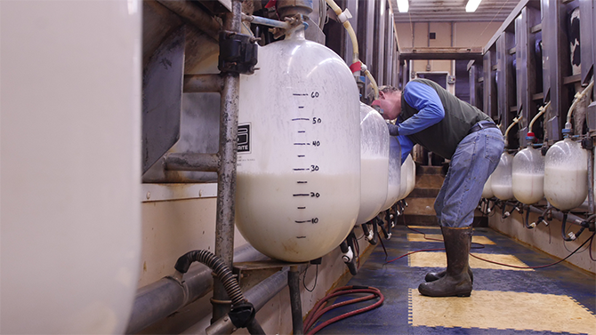A milker inspects large glass containers of milk on Monument Dairy Farm where they produce fresh Vermont milk