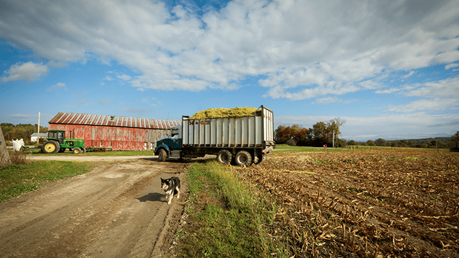 A dog walks along a field with a truck behind him holding clippings, on the Monument Dairy Farm where you can schedule a Vermont farm tour.