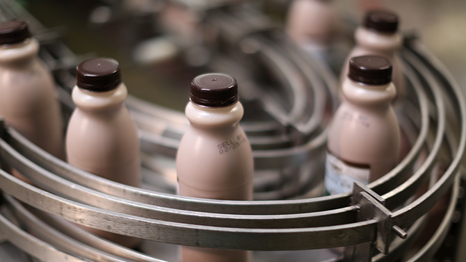 How is milk made? Pints of Monument fresh local chocolate milk travel down the bottling line.